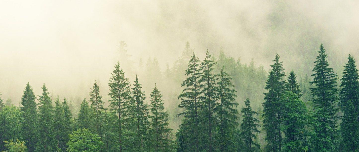 Le bois, un choix eco-responsable